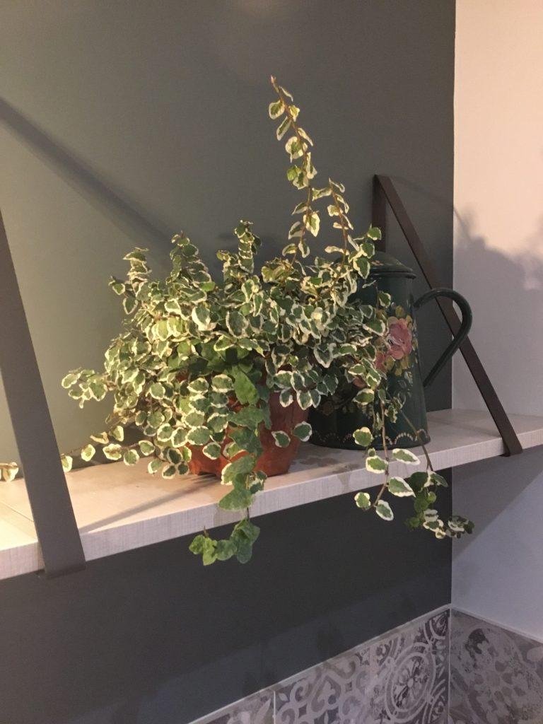 Exemple de décoration d'étagère